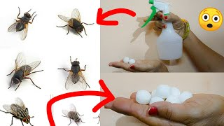 1मिनिट में घर में से सारी मक्खियाँ भाग जाएँगी असरदार उपाय का कमाल देख आप भी चौंक जायेंगें।Easy Tips