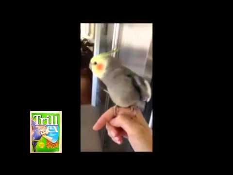 The Dubstep Bird -vs- The Titifers