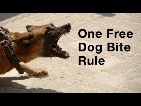 one-free-dog-bite-rule-–-eugene-personal-injury-lawyer