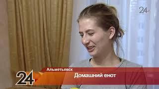 Аккаунт енота из Альметьевска набирает популярность в соцсетях