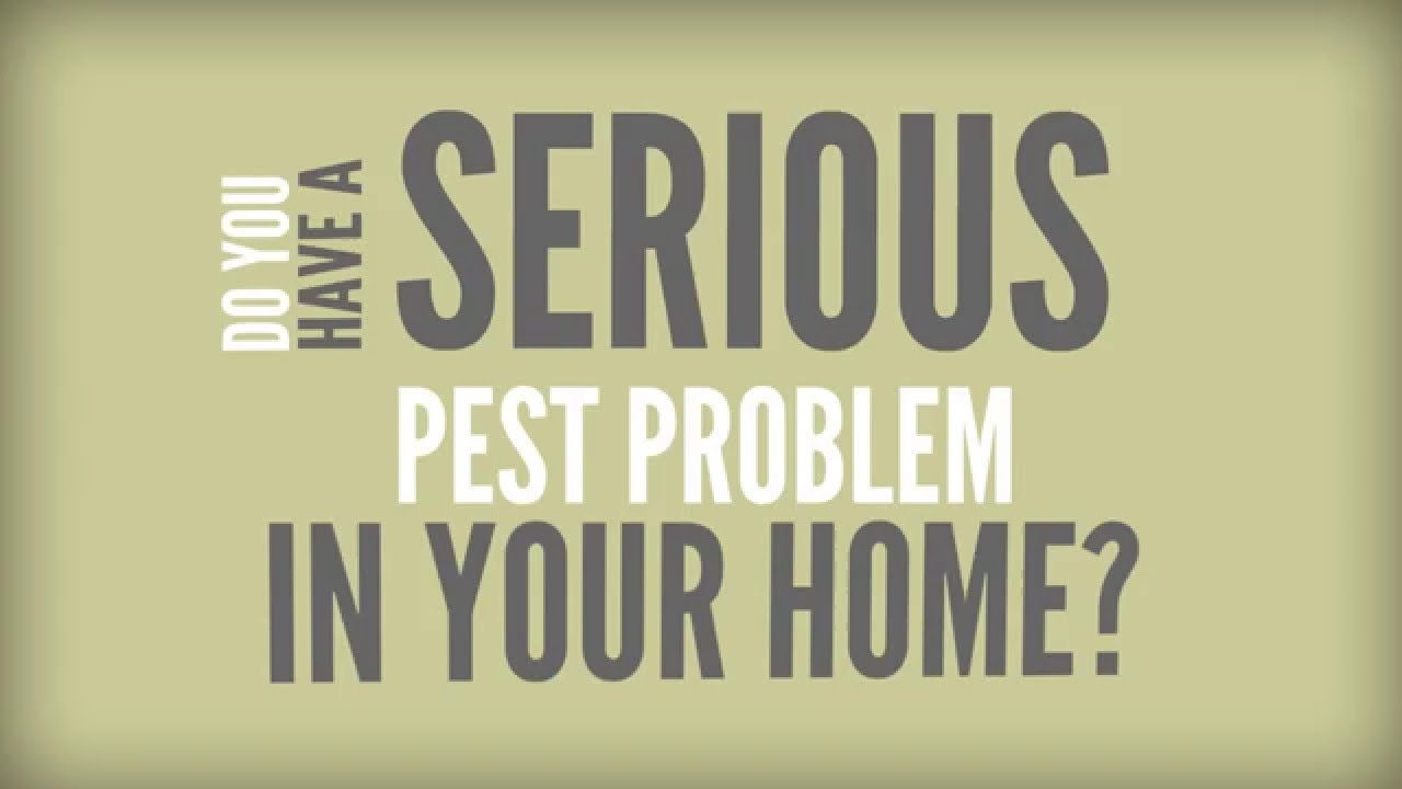 Pest Control Marketing Video - Generate Pest Control Leads With Video
