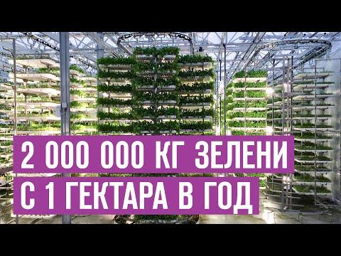 2 000 000 кг зелени с гектара в год. Бизнес выращивание зелени в вертикальных теплицах Траварт 2020