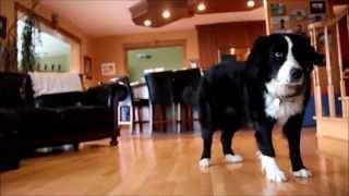 RIP Mon chien .. ♥ - Hommage a toi Matrice