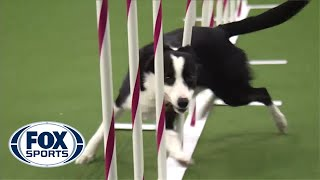 Watch Border Collie, Tex, Win 2015 Masters Agility Championship | FOX SPORTS