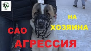 Кинологический центр Барс. Агрессия САО на хозяина. Дрессировка собак в Новосибирске