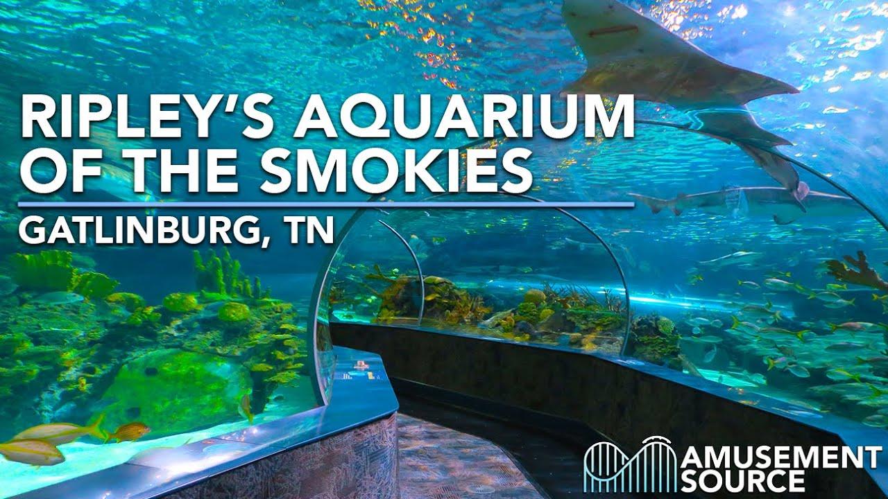 Tickets For Aquarium In Gatlinburg Tennessee - Aquarium Views