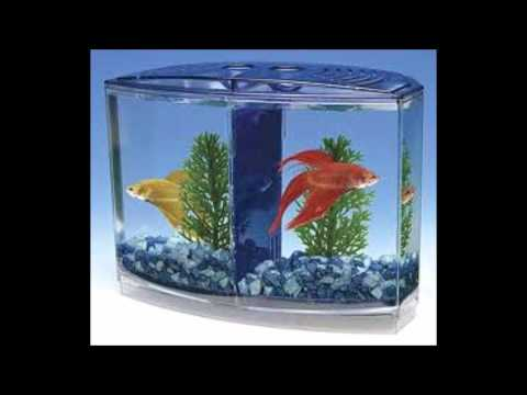 Help stop betta fish abuse youtube for Petco fish sale