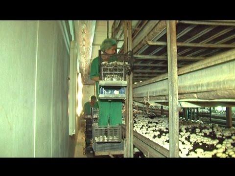 как создать грибную ферму