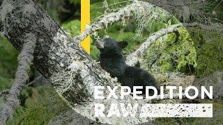Adorable Bear Cubs Crash Campsite | Expedition Raw
