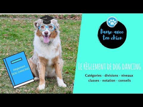Règlement Dog dancing : Tous les petits trucs à savoir
