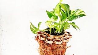 unique hanging planter/ plastic bottle ideas /money plant growing style/ORGANIC GARDEN