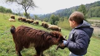 видео туры из Одессы в Карпаты