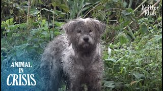 Dog Left Alone In An Island Still Looks For Her Puppy After Typhoon | Animal in Crisis EP172