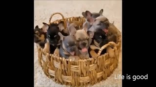 Cute and Funny Animals Video