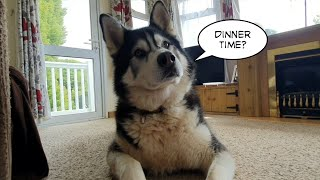 Dog Talks so well he can Chose his Own Dinner!