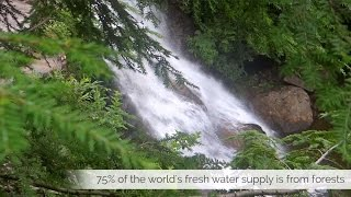 How Trees Help Create the Fresh Water Supply