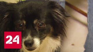 В Москве мужчина на глазах подростка зверски убил его собаку - Россия 24
