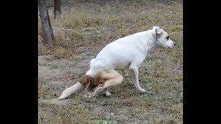 Лечение Белки, собаки в которую стреляли