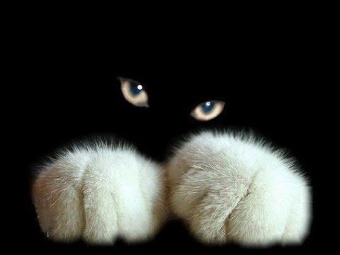 Смотреть кошкины приколы! или скачать бесплатно