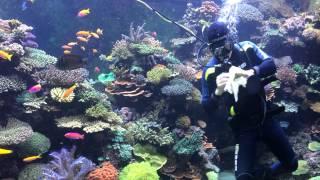 Мойка аквариума в Aquarium Sentosa(, 2014-04-15T18:34:28.000Z)