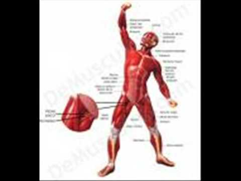 cuerpo humano.wmv/ PAULINA PALMA OJEDA