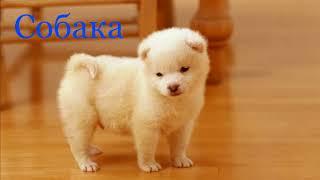 Домашние животные  Познавательное видео для детей