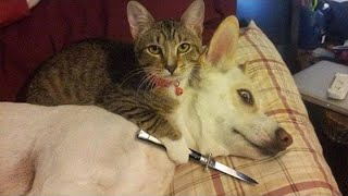 Dogs vs Cats FUNNY Compilation 2021