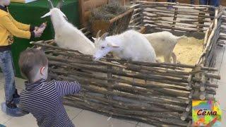 Контактный зоопарк Екатеринбург Petting zoo part 1