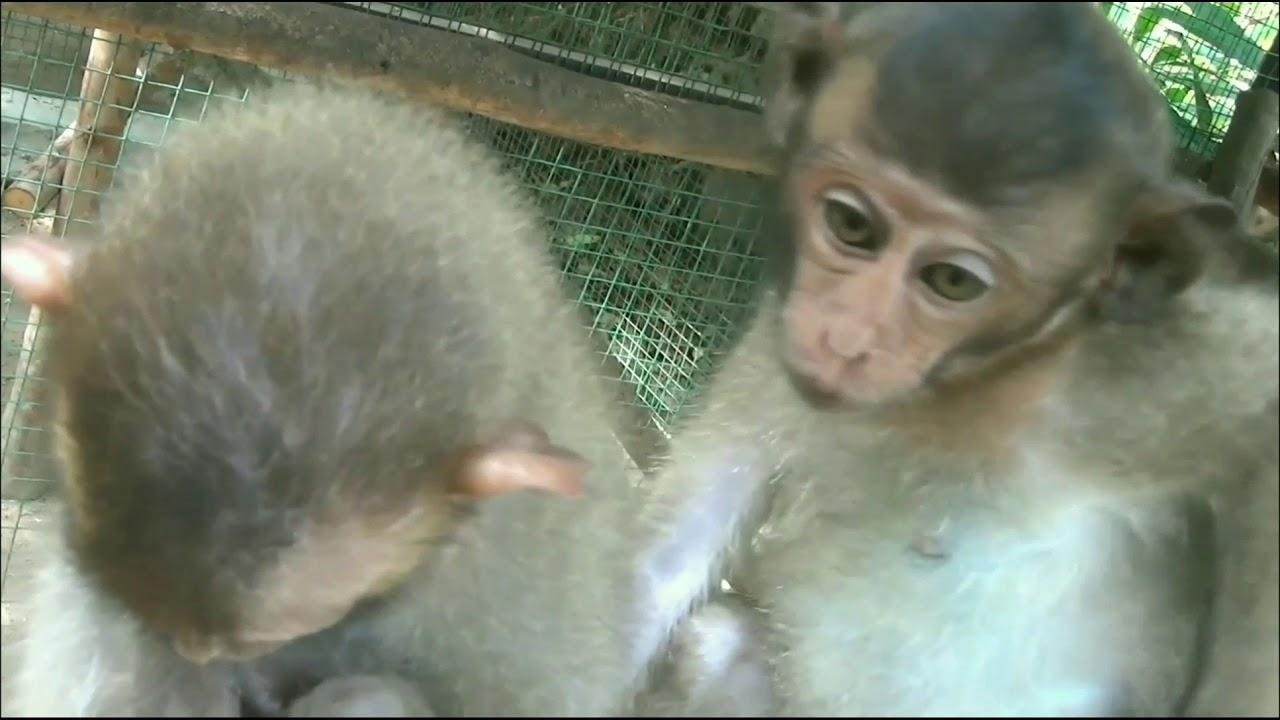 Baby monkey Lori has new friends! 😊 🙂 - YouTube