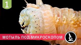 Удивительная форма личинки комара под микроскопом