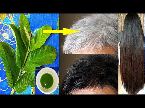 White hair to black naturally permanent and grow long hair with guava leaves