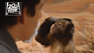 "Night at the Museum | ""Slapping the Monkey"" Clip 