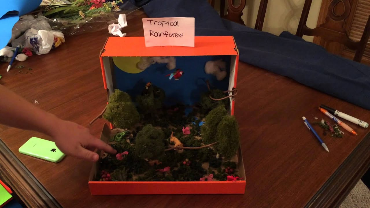 rainforest projects How to make rainforest in a shoebox - school project rainforest diorama tropical rainforest diorama by bryn  diorama of a sloth's habitat in the rainf.
