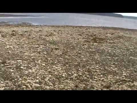 Chum Salmon Run Phantom Drone Hood Sport 2016из YouTube · Длительность: 2 мин38 с
