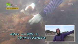 자연산 우뭇가사리 채취 현장 [2TV 생생정보] 202…