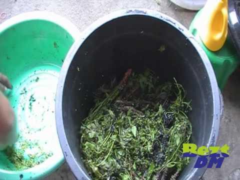 น้ำหมักสะเดาสูตรไล่แมลง
