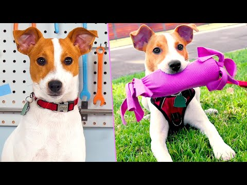 diy-puppy-life-hacks-|-make-these-treats-for-your-pet-instead-of-buying-new-ones
