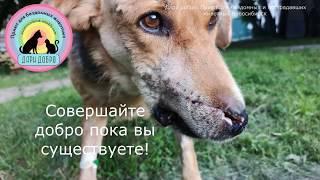 Счастливое спасение собаки после выстрела в упор в нос Живи Гром Новосибирск Дари добро