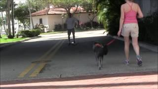 Dog Aggression -  Dog Attacks Skateboards