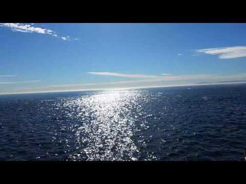 Large School of over a Thousand Dolphins near Newport Beach California