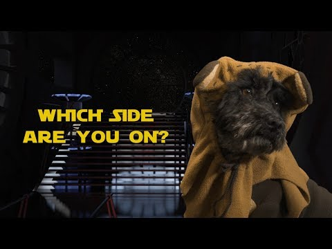 Download Youtube: Star Wars Dogs Cosplay: Petcube Pet Factions with Treats vs. Play