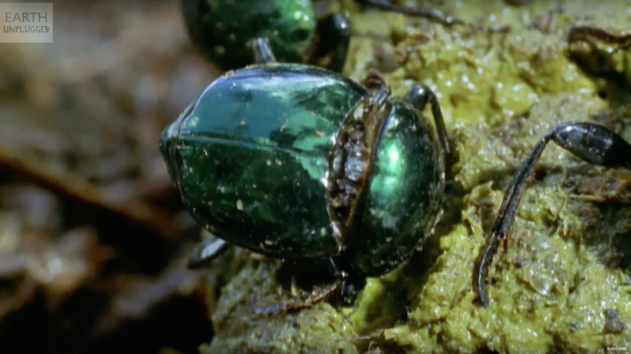 why beetles are awesome slo mo 38 earth unplugged youtube