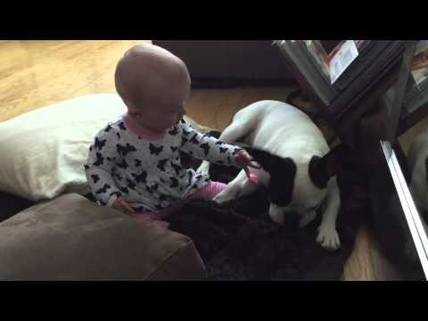 Adorable baby meets patient Bulldog