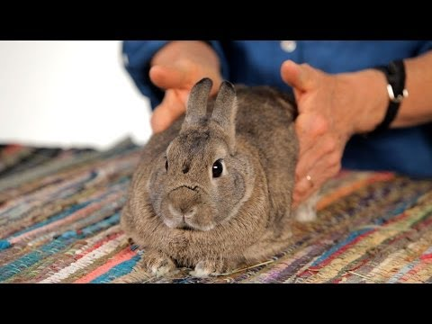 How to Help a Rabbit with Gas Pain | Pet Rabbits