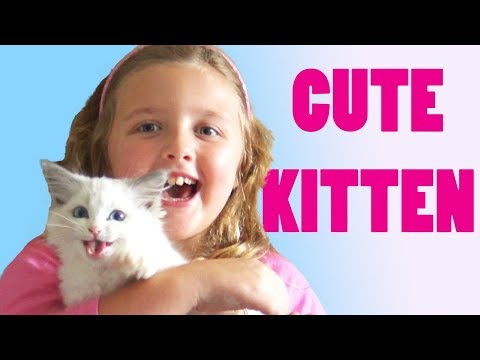 Little Kitten My Cute Cat Finally has name & I almost got pooped on! New toys and Game for Pet