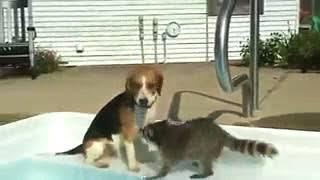 енот и собачка смотреть онлайн бесплатно — хорошее кач
