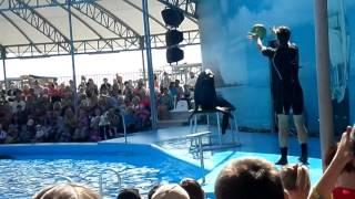 ДЕЛЬФИНАРИЙ НЕМО БЕРДЯНСК ЧАСТЬ 2 Dolphinarium Nemo BERDYANSK PART 2