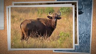 Indian Wildlife Tour | Best Wildlife Packages in India | Jim Corbett National Park