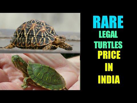 """Price Of Turtles In India À¤ À¤°à¤¤ À¤® À¤•à¤› À¤"""" À¤• À¤• À¤®à¤¤ Price Of Aquarium Turtles In India Flora And Fauna Youtube"""