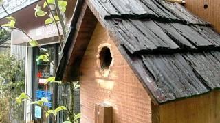 2010.4.23 シジュウカラのヒナ鳥の声。 営巣したジジュウカラがエサ運びしてたから、 ヒナが、かえったんだ...